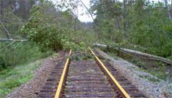 tree on rr tracks
